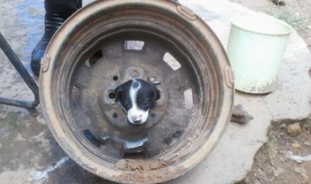 aozinho dentro de roda de caminhão