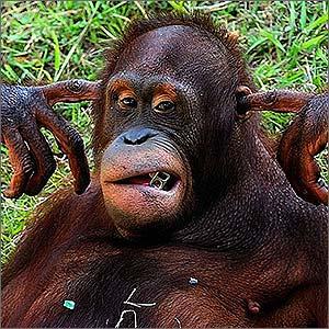 Foto da Semana - macaco